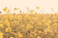 Yellow Flower Field Meadow Vintage Retro