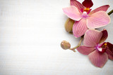Fototapeta Orchid - Pink orchid flower.