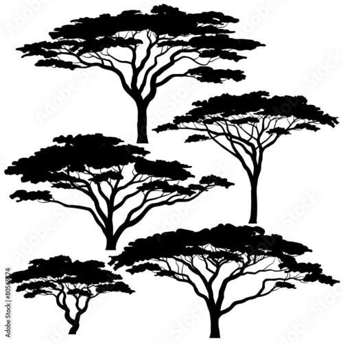 Photo Acacia tree silhouettes