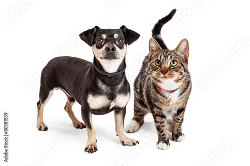 Dog and Cat Standing Looking Up Together © adogslifephoto