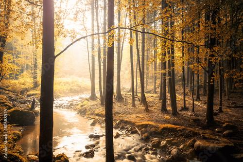 Foto auf Acrylglas Bestsellers Wenn das Licht im Walde scheint