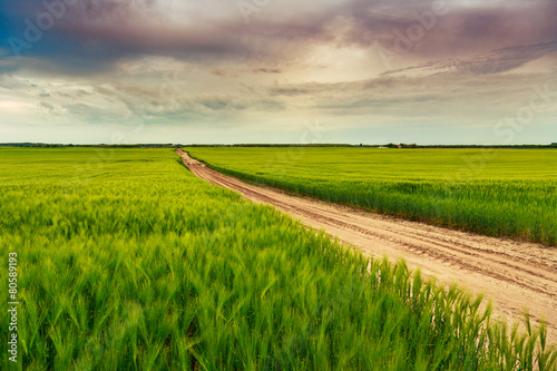 Poster Lime groen Summer in meadow