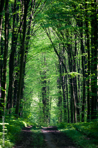 Fototapeta beautiful green forest obraz na płótnie