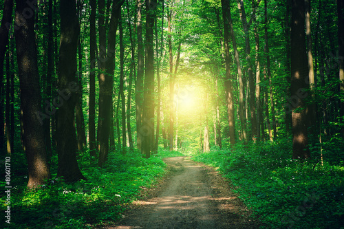 Garden Poster Road in forest beautiful green forest