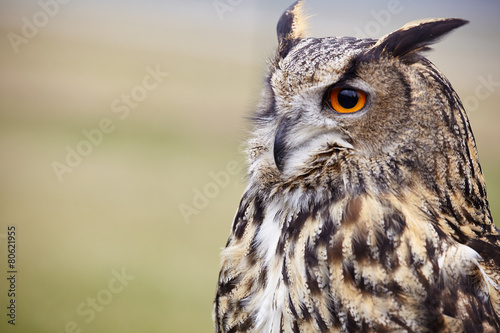 Spoed Foto op Canvas Uil Eagle Owl/An eagle owl