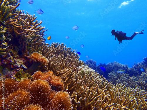 珊瑚礁とダイバー