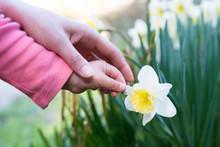 水仙の花を触る親子の手