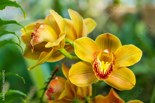 Montage in der Fensternische Orchideen Bouquet of yellow cymbidium.