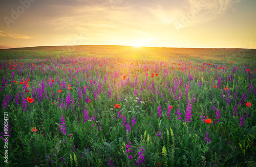 Fototapety, obrazy: Field with grass, violet flowers and red poppies