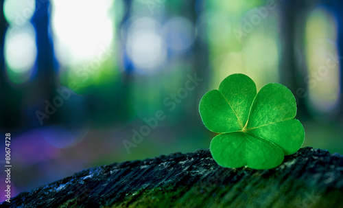 Shamrock in forest