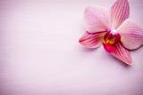 Różowa orchidea na różowym tle