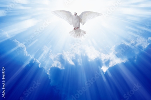 Foto op Aluminium Bar Holy spirit dove