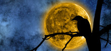 Full Moon Behind The Tree And A Raven On It.