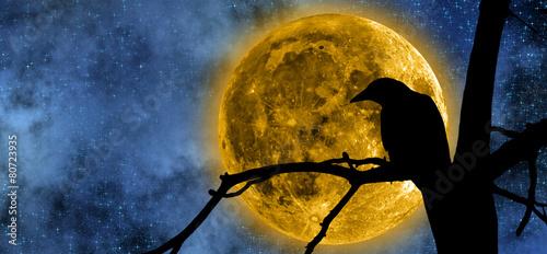 Obraz na plátně Full Moon behind the tree and a raven on it.