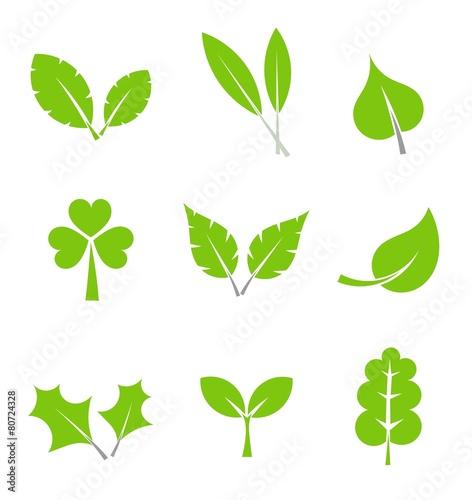 Fototapeta Leaves collection obraz na płótnie