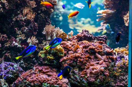 Poster Sous-marin Underwater scene