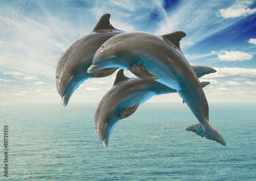 Wall Murals Dolphins three jumping dolphins