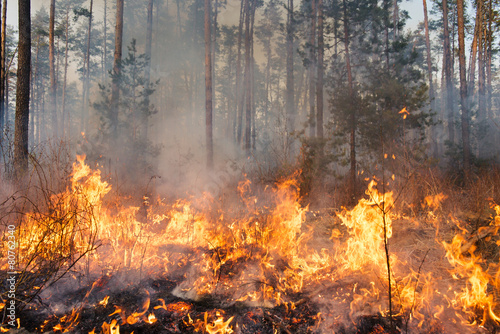Photo  Forest fire in progress