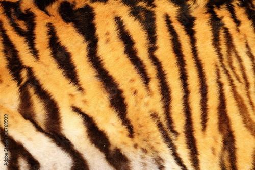 Deurstickers Panter beautiful tiger textured fur