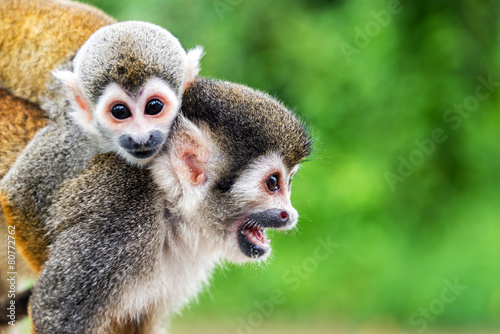 Spoed Foto op Canvas Aap Squirrel Monkey Mother and Child