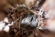Inside Of Bird Next Box And Ba...