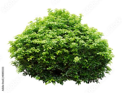 Ornamental tree Fototapet