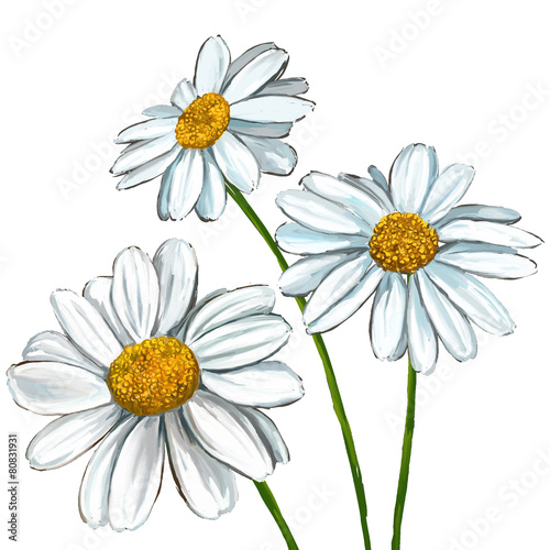 daisy vector illustration  hand drawn  painted Fototapete