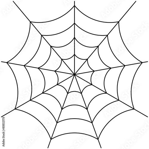 Fotografia spider web isolated on white vector