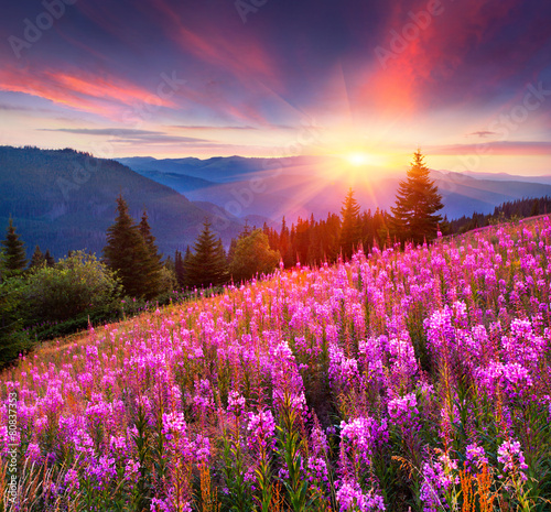 Printed kitchen splashbacks Eggplant Colorful summer sunrise in the mountains with pink flowers.