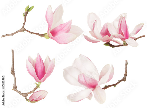 Fotobehang Magnolia Magnolia flower twig spring collection on white, clipping path