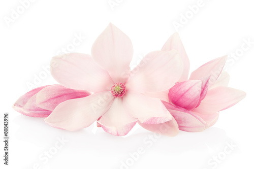 Staande foto Magnolia Magnolia, pink flowers and buds group on white, clipping path