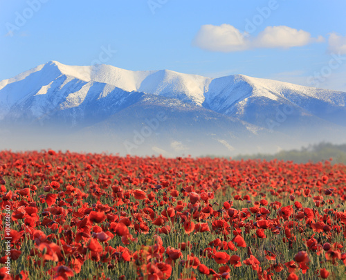 Poster Poppy poppy flowers an mountains