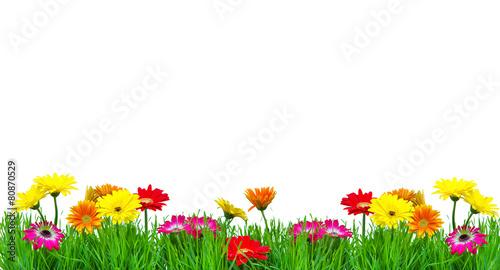 Foto op Aluminium Gerbera Muttertag Blumenwiese