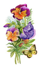 Watercolor Colorful Pansies With Butterfly On White Background