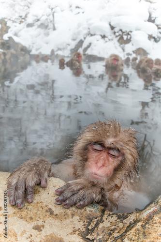 Foto op Plexiglas Aap 温泉のおさるさん Monkeys and snow-see viewing hot spring