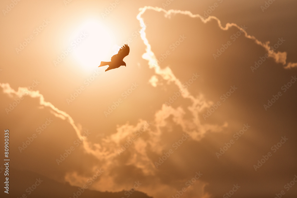 View of an eagle with sun and clouds in background