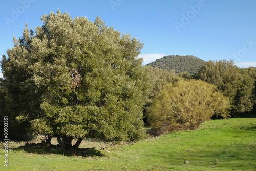 Fényképezés  Mediterranean Vegetation In Etna National Park, Sicily