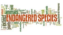 Endangered Species Concepts
