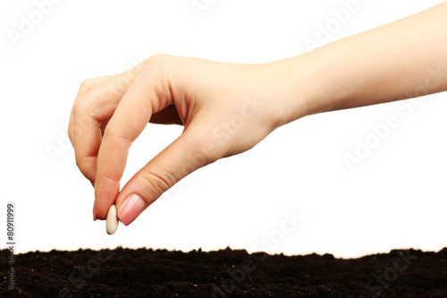 Fotografía Female hand planting white bean seed in soil isolated on white