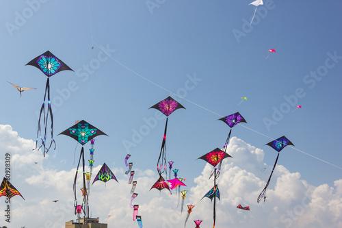Fotografie, Obraz  Festival Kite