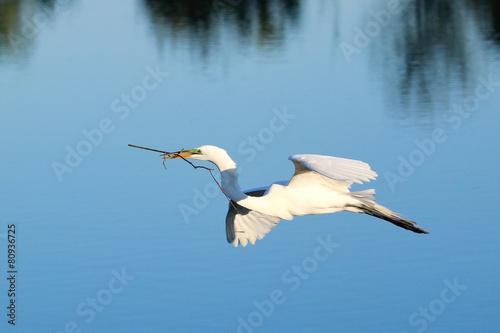 Αφίσα  Great egret flying with building material