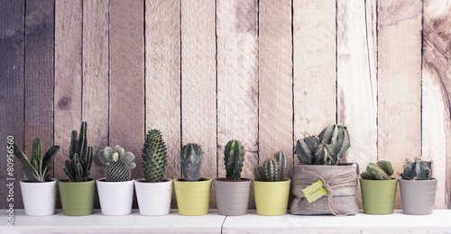 Fotobehang Cactus Cactus and succulents collection in small flowerpots