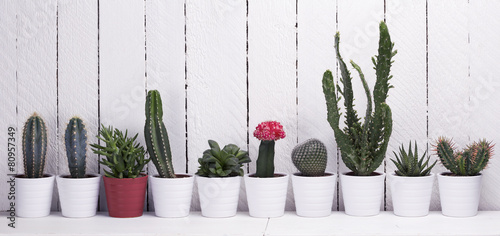 Cactus, aloe and succulents on a wooden background