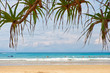 Screwpine on Kata beach on Phuket island in Thailand