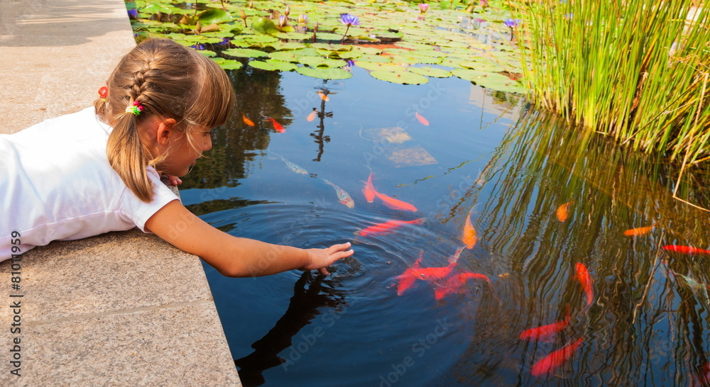 Fototapety, obrazy: Little girl plays with ornamental fish that swim in  pond