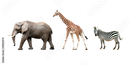 African animals isolated on white background Tapéta, Fotótapéta