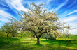 Leinwanddruck Bild - Idyllische Frühlingslandschaft