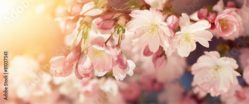 Wiśniowe kwiaty w delikatnych kolorach retro