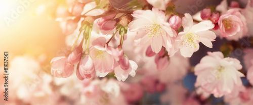 Foto-Schiebegardine ohne Schienensystem - Kirschblüten in sanften Retro-Farben