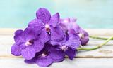 Fototapeta Orchid - Purple orchid on wood background